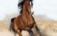 Giáp Ngọ: Nói chuyện Ngựa trong khoa học và đời sống