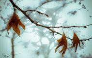 Sắp Hết Mùa Thu
