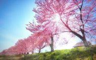 Dốc Nắng Mùa Xuân
