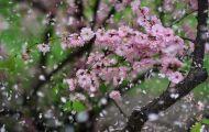Mùa Xuân Ở Một Nơi Nào Để Nhớ